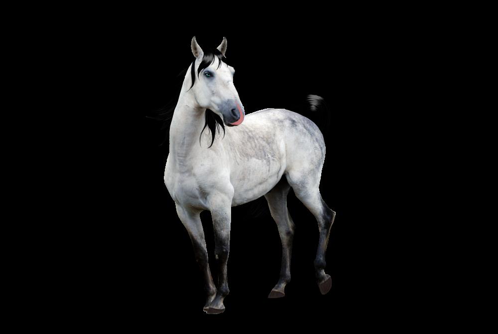 صور احصنه بدون خلفيه png سكرابز حصان png صور احصنه dun_premade_by_looserfaceman-d5tux3d.png