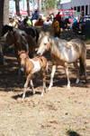 Chincoteague Pony 90