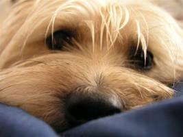 Dog by xhorsegirlx