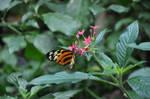 Butterfly Museum 30