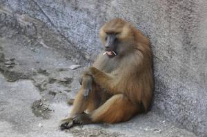 Brookfield Zoo 129