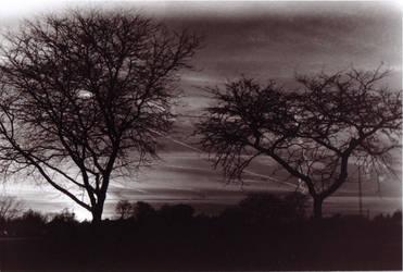 Trees at Dusk by heyheybeautiful