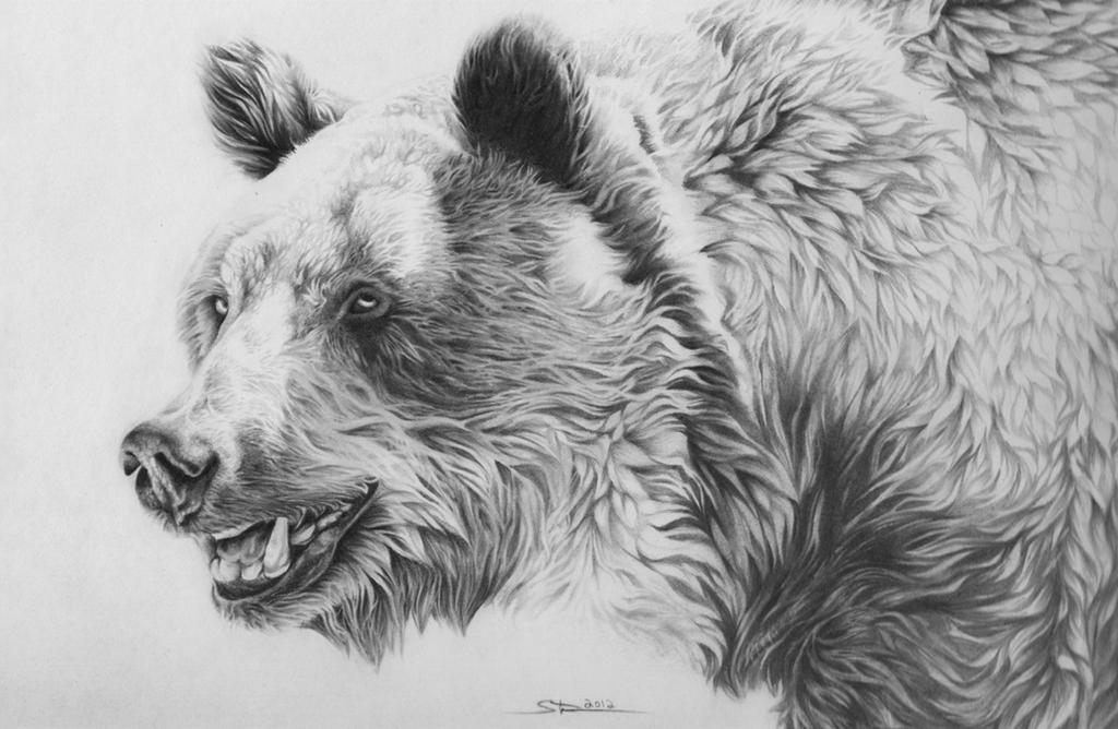 Grizzly Bear by Naviira on DeviantArt  Grizzly Bear by...