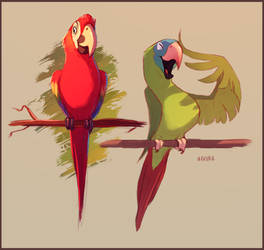 The Macaw and the Conure