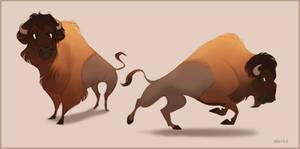 Bill the Bison