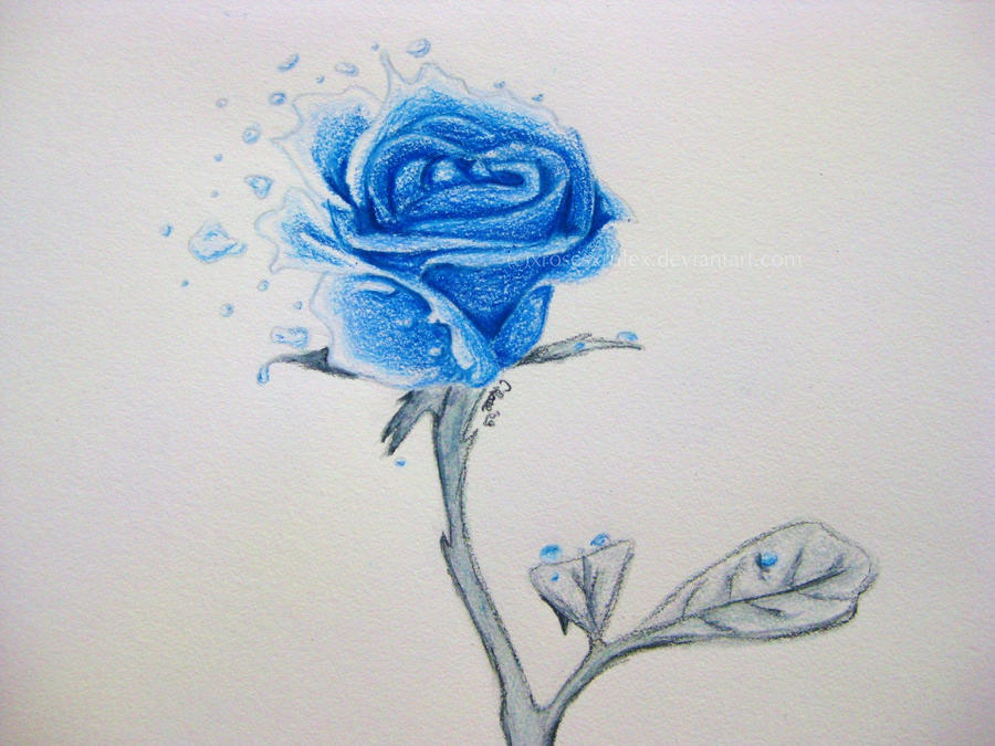 Ocean Blue Rose
