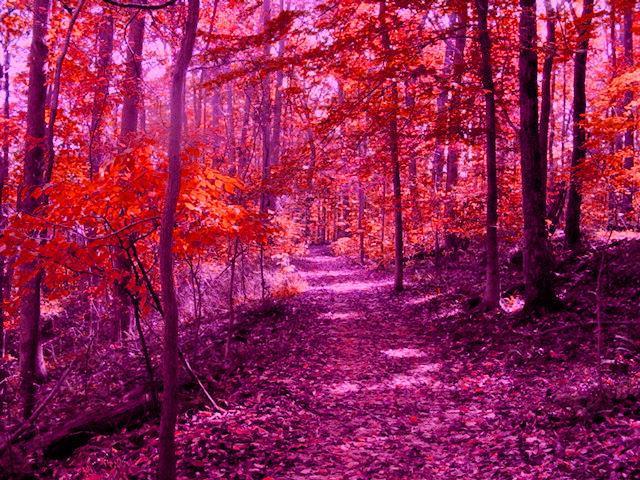 Purple Paradise by jester81