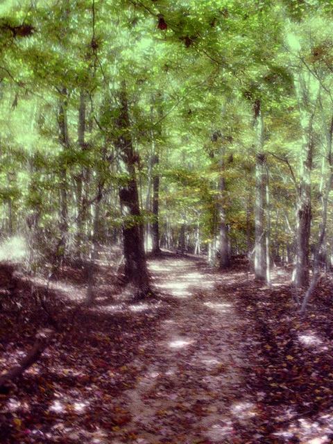 Dreamy Path by jester81