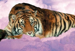 Tiger in the Sky by vrgraphics
