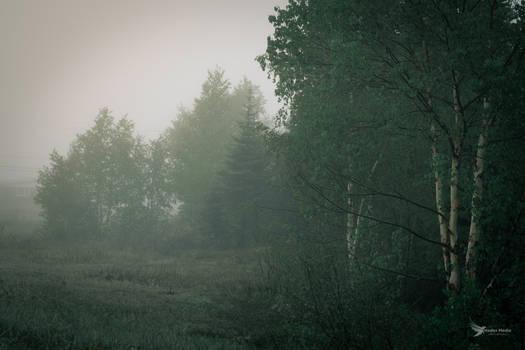 Misty forest in northern Quebec