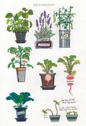 Zacky Plants   Sticker collection