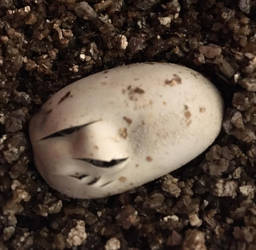 The first Egg Hatches