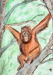 Orangutan Sketchcard