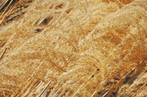 Texture-Wheat5 by 2bgr8STOCK