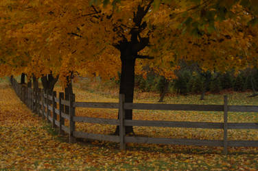 Autumn Scene 1 by 2bgr8STOCK