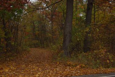 Autumn Scene 2 by 2bgr8STOCK