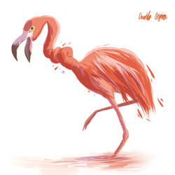 06-Flamingo by JoelKodama