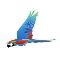 flying parrot vector illustration
