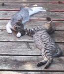 Sleepy duo