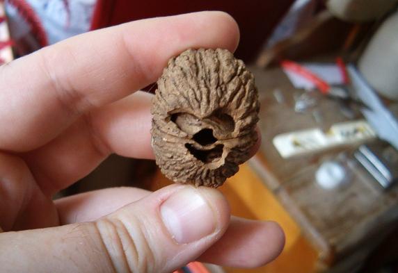 Chewie walnut by Ripplin