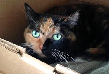 Beautiful split muzzle cat by Ripplin