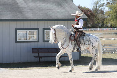 WEG2010 Horse and Rider 2Stock by Lovely-DreamCatcher