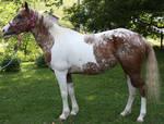 My Horse Jojo Standing - Stock 2