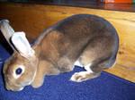 Rabbit Stock 2