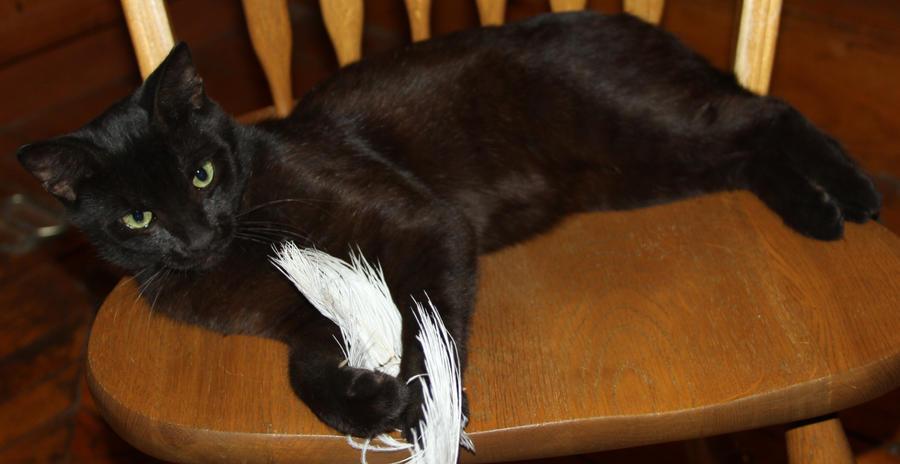 Salem Cat - Stock 15 by Lovely-DreamCatcher