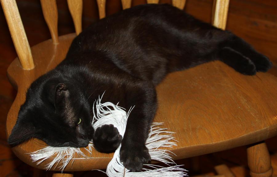Salem Cat - Stock 14 by Lovely-DreamCatcher