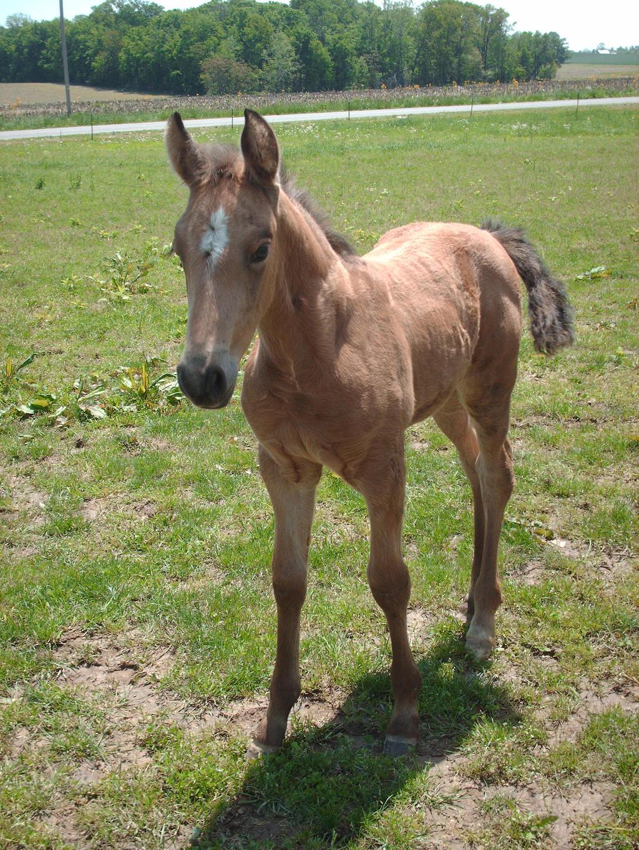 Foal 2 Stock by Lovely-DreamCatcher