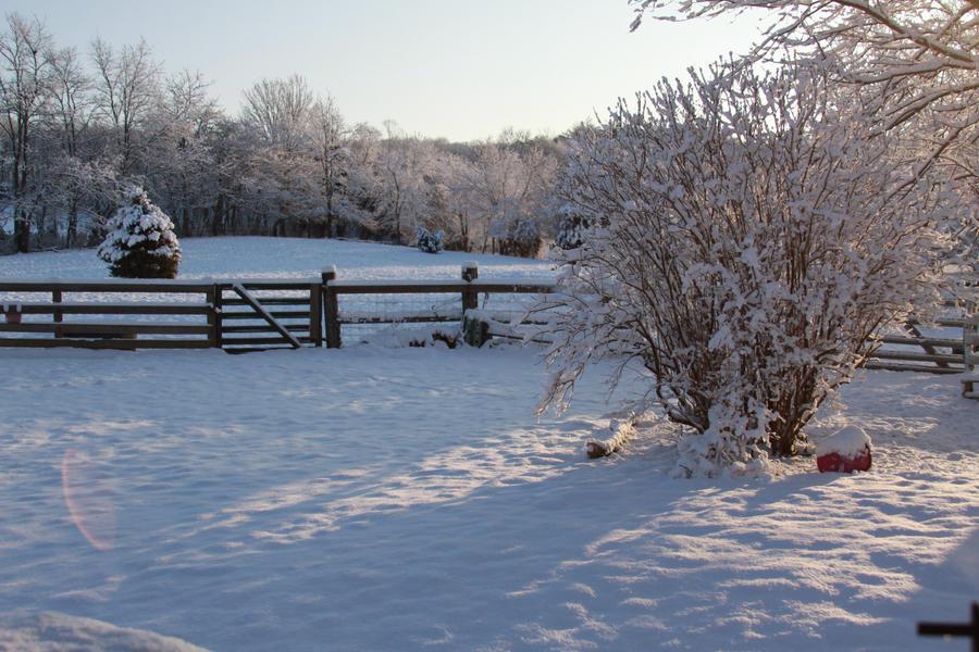 Winter Snow Stock1 by Lovely-DreamCatcher