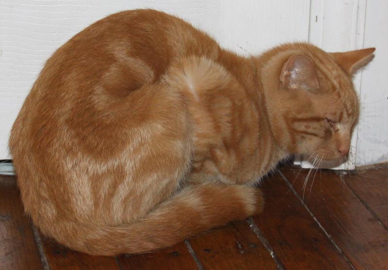 Orange Kitty Stock 11 of 18 ~ Nomad by Lovely-DreamCatcher