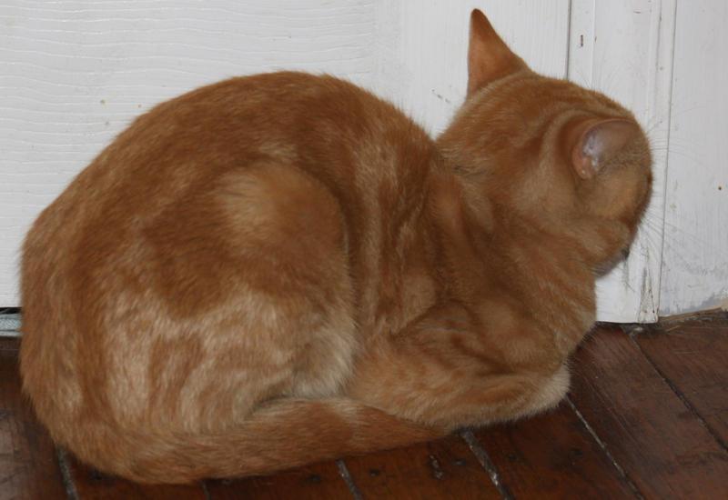 Orange Kitty Stock 17 of 18 ~ Nomad by Lovely-DreamCatcher