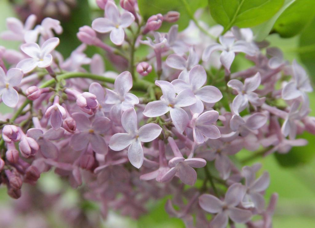 Purple Flower Stock 1 of 5 by Lovely-DreamCatcher