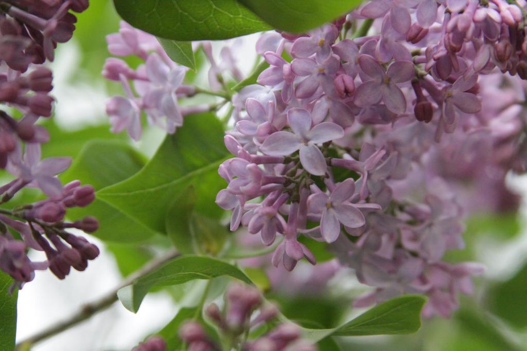 Purple Flower Stock 2 of 5 by Lovely-DreamCatcher