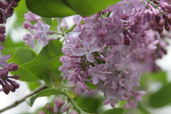Purple Flower Stock 4 of 5 by Lovely-DreamCatcher