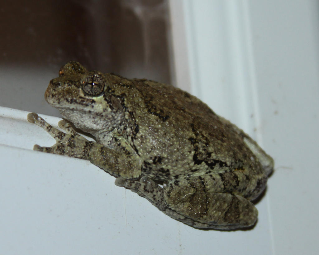 Tree Frog Stock - 4 of 8 by Lovely-DreamCatcher