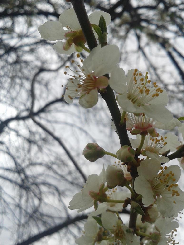 Hello, spring by darkstriiker
