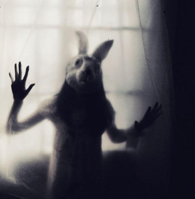 I dream with a rabbit...