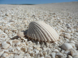 Shell on Shell Beach by Antmuzik77