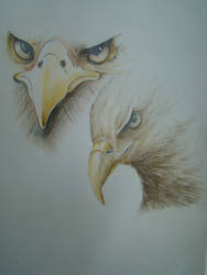 Drawings by Issoo