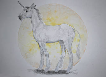 Another unicorn by DandyHerulokion