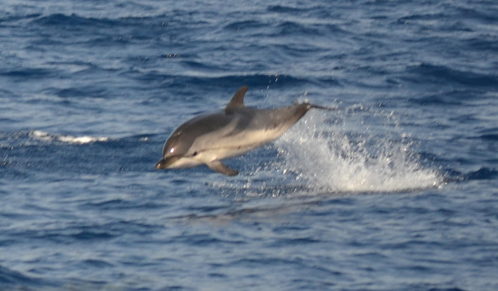 the first dolphin in wild i saw