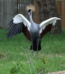 Gage Park Zoo 3 - Bird