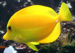 Gage Park Zoo 9 - Fish