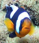 Gage Park Zoo 10 - Fish