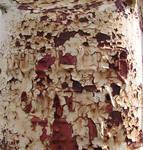 Oklahoma Rust 31
