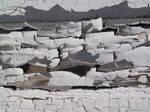 Oklahoma Cracked Paint 28