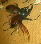 Hogle Zoo 70 - Beetle